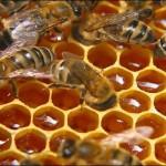 Лечение акне народными средствами или сырой мёд в действии